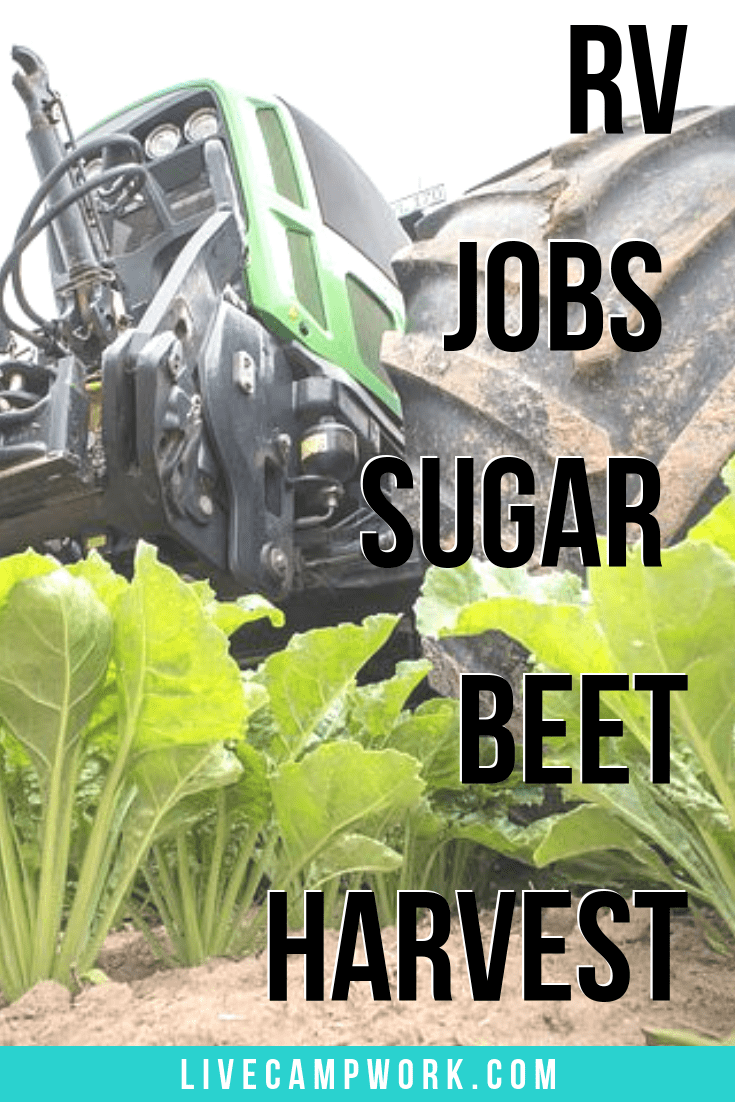 Workamping at the Sugar Beet Harvest offers an RV job with the chance to rack in $2500 in just 2 weeks. Called the Unbeetable Experience inside the RV community, this is a Workamping job by Express Employment Professionals.