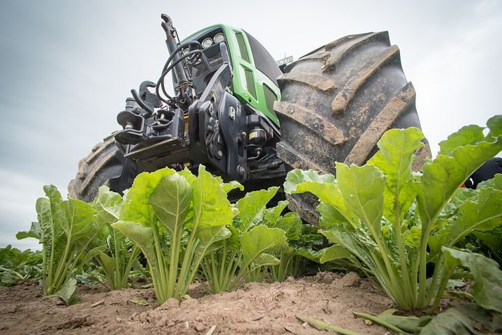 The Sugar Beet Harvest- an Unbeatable Experience