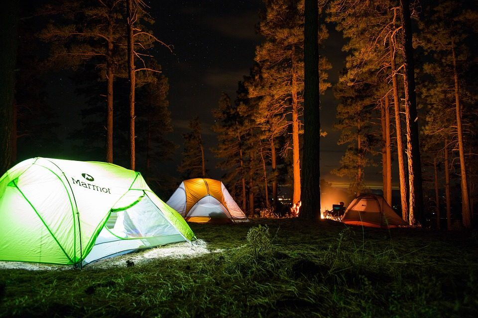 Tent Camping in the Redwoods
