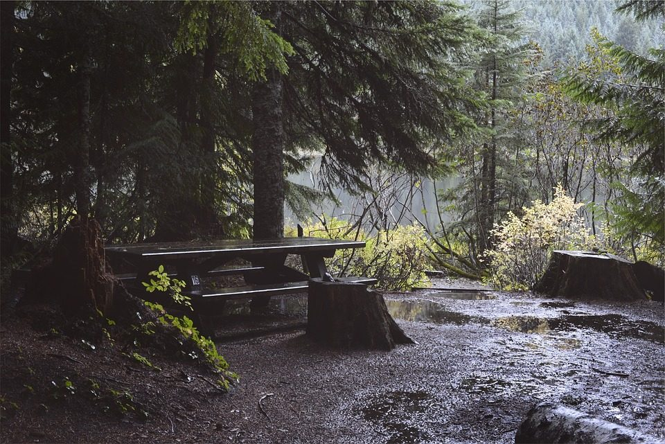 Cabin Camping in the Redwoods